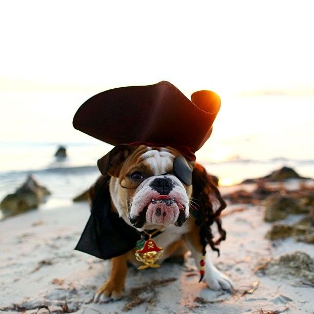 Top 10 English Bulldog Halloween Costumes That Are Going To Blow ...