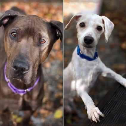 Credit: Shelter Dogs of Portland