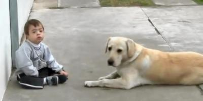 Female Labrador Tries Hard To Befriend Child With Down