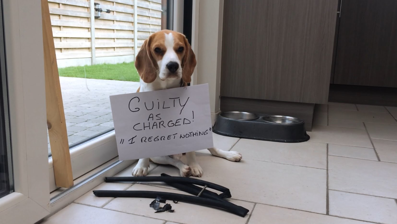 Hilarious Beagle Shaming Video That Will Make Your Day