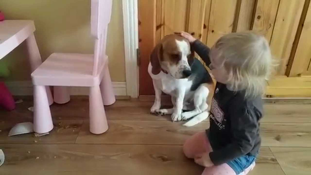 Sweet Toddler Consoles And Hugs Her Beagle Even Though He