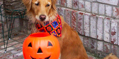 halloween is just around the corner but these golden retriever pups are more than ready to celebrate if youre a golden retriever parent you might want