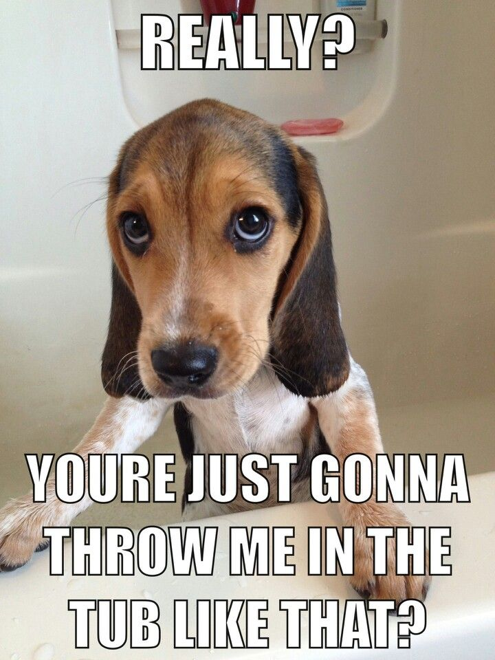 If You're A Beagle Parent You're Going To Relate To These ...