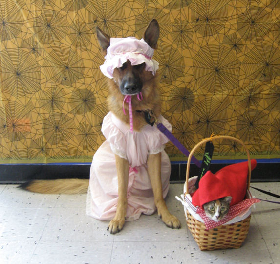 Top 6 German Shepherd Pups Who Don T Like Their Costumes