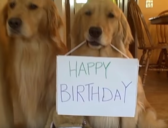 You Just Gotta See This Awesome Golden Retriever Birthday Party A