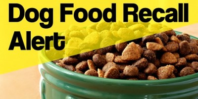 Popular Dog Food Recalled Due To Possible Salmonella Contamination