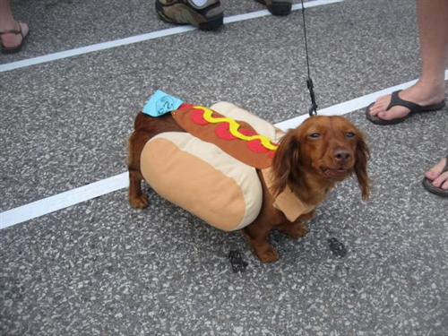 Happy Almost Easter Everybody 35 Photos also 284078688968766214 likewise Dachshund Hunting Dog Ready Deer Season moreover Stock Photo Little Ballerina Girl Looking Up Image36861240 further Betty draper on mad men season 6 is the january jones character mean or. on weiner costume