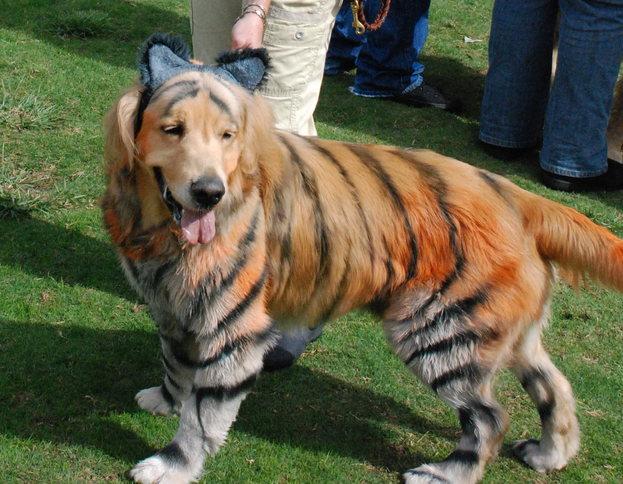top 5 halloween costumes for golden retrievers that are simply