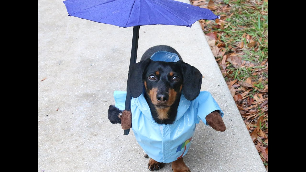 This Pup Is Enjoying Himself In The Rain Like A Boss Look