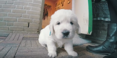 How This Adorable Pup Grows From Puppyhood To Adulthood Will Make